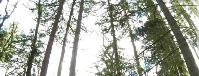 Tryon Creek State Park is one of Tempat yang Disukai Alisa.