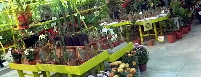 Plantas Faitful is one of Tempat yang Disukai Ezequiel.