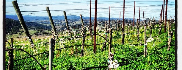Hirsch Winery is one of Sonoma County.