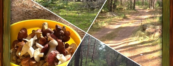 Грибной лес is one of Andriy 님이 좋아한 장소.