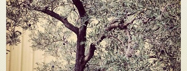 Lucero Olive Oil is one of Locais salvos de Paresh.
