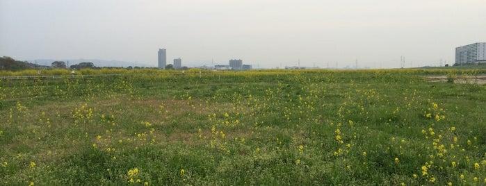 淀川河川公園 島本地区 is one of 淀川探訪.