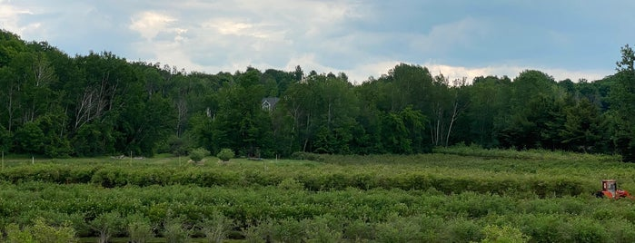 Buchan's Blueberry Hill is one of Tempat yang Disukai Nicole.