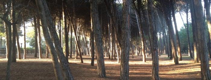 Pineta di Pinarella is one of Posti che sono piaciuti a Mik.