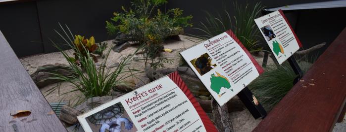 Kuranda Koala Gardens is one of Ozzie Kiwi.