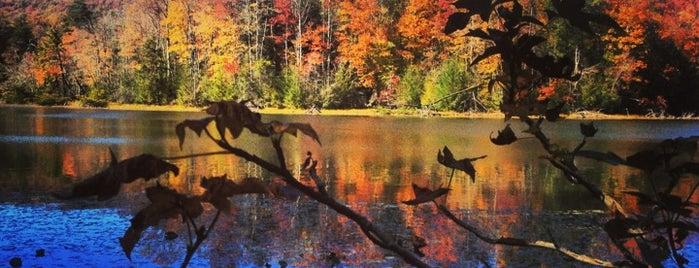 Bays Mountain Park is one of Parks near Johnson City TN.