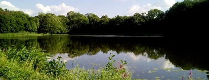 Нескучный пруд (Фюрстентайх) is one of Vyacheslav 님이 좋아한 장소.