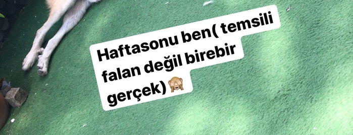Dekar Asmalı Hayat is one of Orte, die Yaşam Ve Moda Notlarım gefallen.