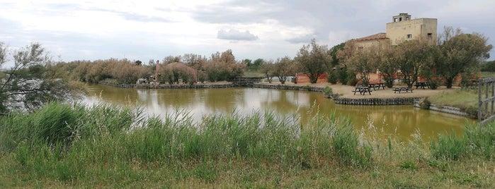 Parco Regionale Del Delta Del Po is one of 🏰 IT Unesco List 🇮🇹.