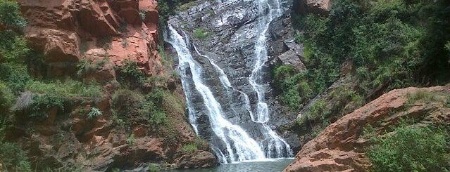 Walter Sisulu National Botanical Gardens is one of Gauteng Hotspots.