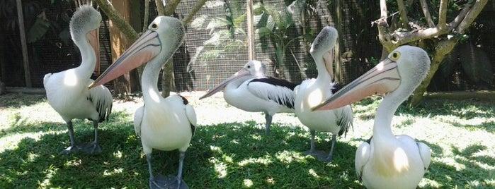 Bali Bird Park is one of DENPASAR - BALI.