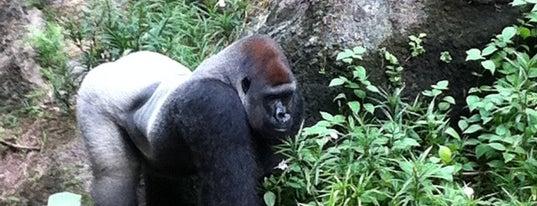 Kilimanjaro Safaris is one of Fun things to do.