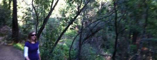 Pfeiffer Big Sur State Park is one of My BEST of the BEST!.