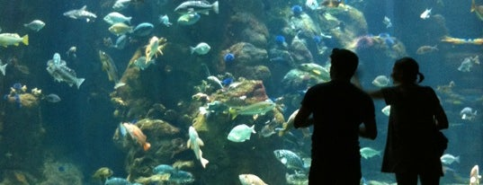 California Academy of Sciences is one of SF - been there!.