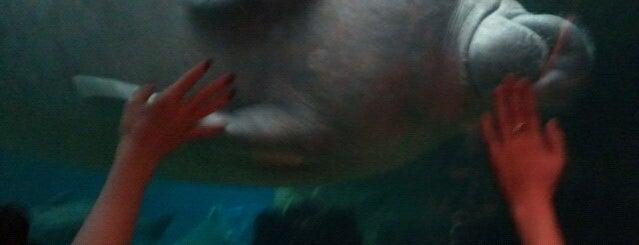 Dallas World Aquarium is one of Dallas: Live Large, Think Big #visitUS.