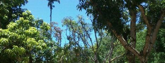 Jardim Botânico do Rio de Janeiro is one of Passeios.