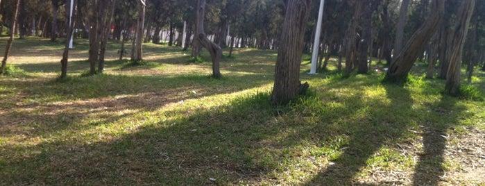 Raghdan park is one of Abha.