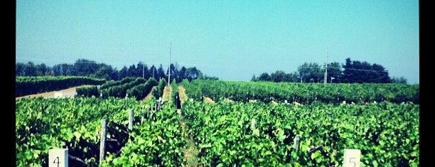 Domaine Berrien is one of Wine & Beer tour St Joseph.