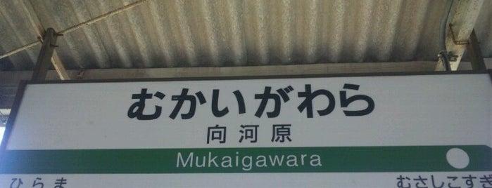 Mukaigawara Station is one of JR 미나미간토지방역 (JR 南関東地方の駅).