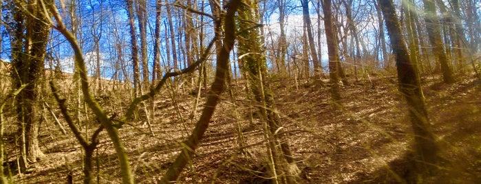 Hiking | Trails