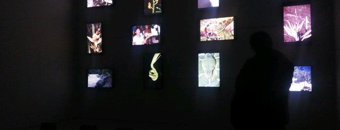 Museo De Arte Universidad Nacional is one of Favoritos en Colombia.