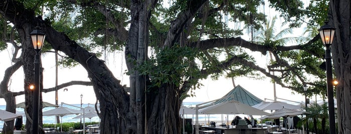 The Banyan Court is one of Favorite Local Kine Hawaii.