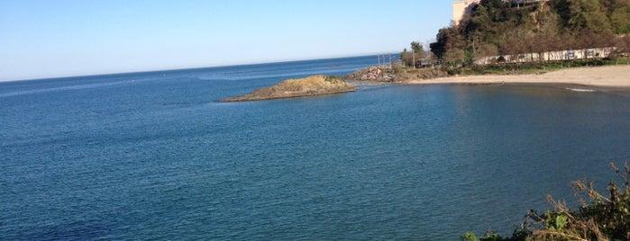 Doğal Dükkan - Falez is one of Karadeniz.