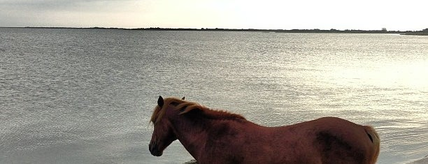 Assateague Island National Seashore (Maryland) is one of 101 Places to Take Your Family in the U.S..