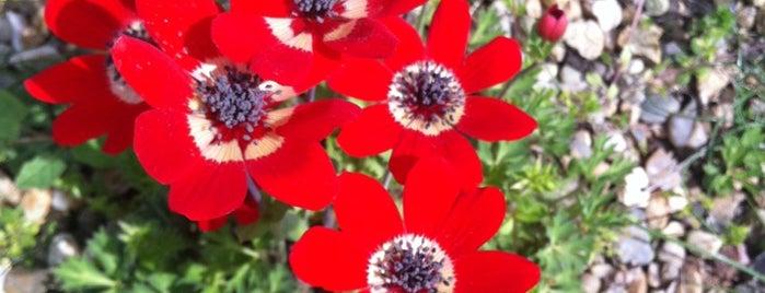 Nezahat Gökyiğit Botanik Bahçesi is one of SÜRÜCÜ KURSU http://www.ozsagyildirim.com/.