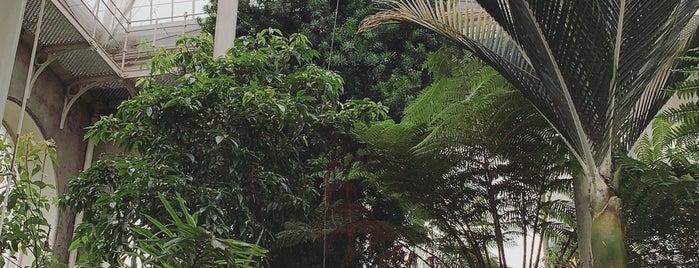 Royal Botanic Garden is one of Lugares favoritos de Paige.
