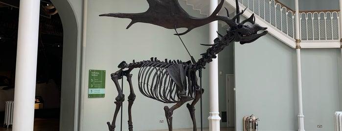 Museo Nacional de Escocia is one of Lugares favoritos de Paige.