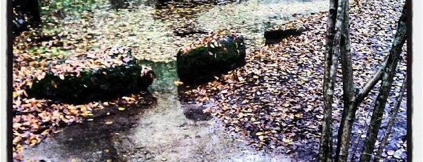 Riserva Fontana del Guerc is one of Locais curtidos por Valeria.