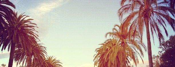 Palm Drive is one of Palo Alto Gems.