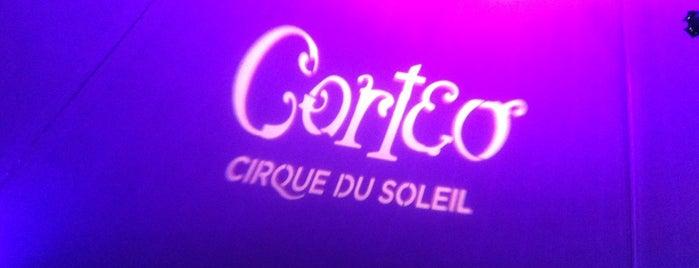 Cirque du Soleil is one of Locais curtidos por 𝔄𝔩𝔢 𝔙𝔦𝔢𝔦𝔯𝔞.