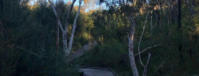 Ku-ring-gai Wildflower Garden Walk is one of Sydney.
