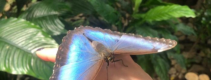 Dubai Butterfly Garden حديقة دبي للفراشات is one of PNR 님이 좋아한 장소.