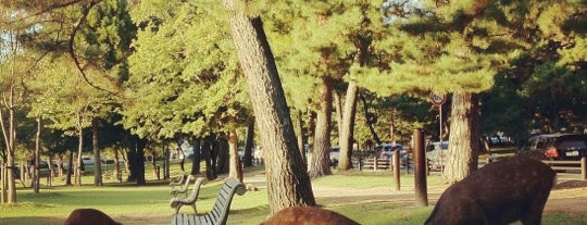 Nara Park is one of Japan.
