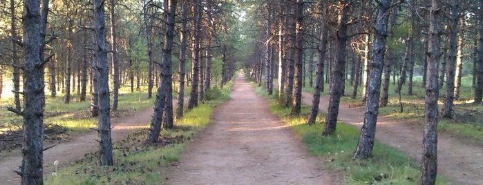 ODTÜ Ormanı is one of Locais curtidos por Nehar.