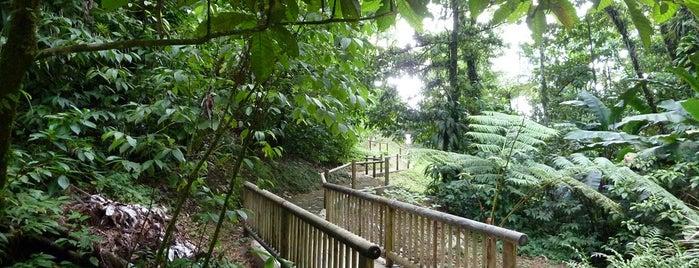 Domaine d'Emeraude is one of Forêts, lieux de balade en nature en Martinique.