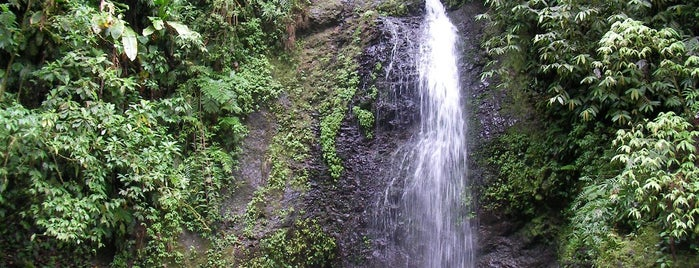 Saut Gendarme is one of Lieux de baignade en eau douce de Martinique.