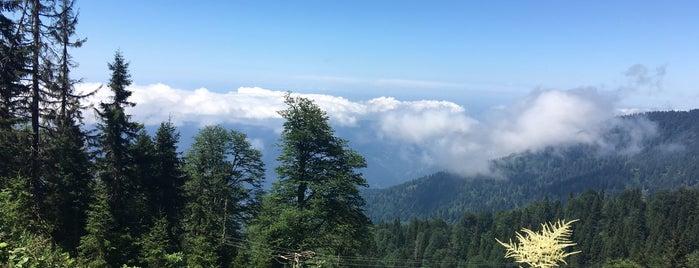 Amlakit Yaylası is one of Mountain Resorts In Black Sea Region.