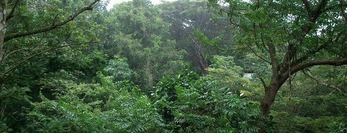 Reserva Ecológica de Caetés is one of Prefeito.