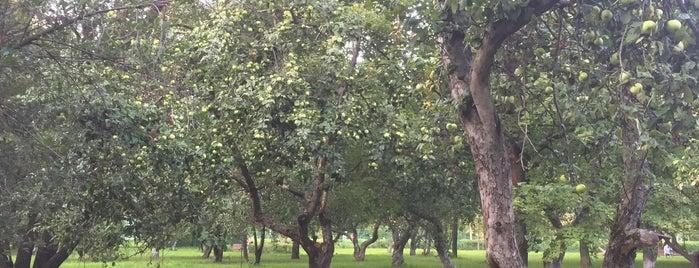 Яблоневый сад is one of Lugares favoritos de Marina.