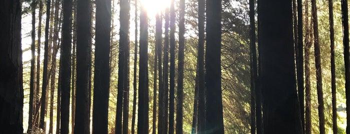 Selva de Irati is one of Posti che sono piaciuti a Sébastien.