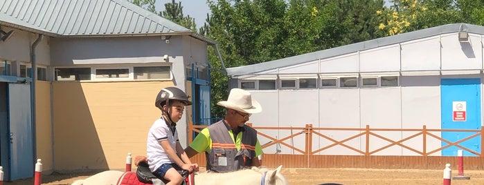 Altinpark Atli Spor Tesisleri is one of Posti che sono piaciuti a Irmak.