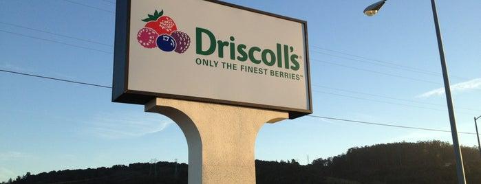 Driscoll's Strawberries is one of Edwin 님이 좋아한 장소.