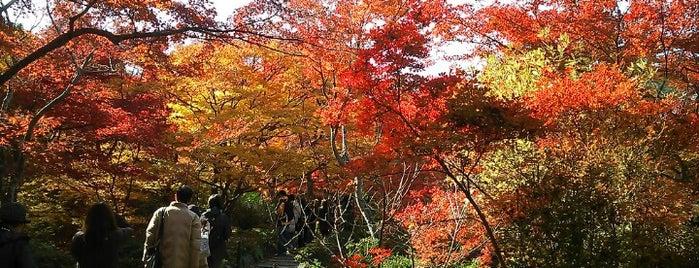 宝筐院 is one of Arashiya temp.