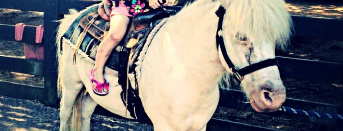 Lawton Stables is one of Hilton Head Kids Activities.