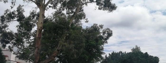 Club De Golf  Tequisquiapan is one of สถานที่ที่ Elena ถูกใจ.
