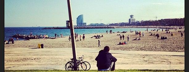 Sotavento Beach Club is one of Barcelona Essentials.